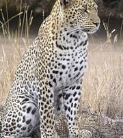 Image Courtesy of Wikipedia